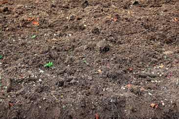 Что такое гумус почвы