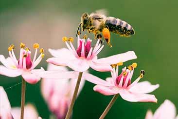 Как пчелы собирают мед ТРАВАРТ travart.ru
