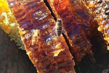 Мёд в сотах Натуральный мед