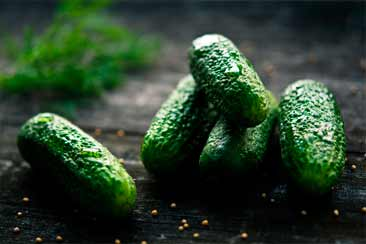 Огурцы, выращивание в открытом грунте