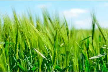 продукция Траварт для органического земледелия и восстановления почв