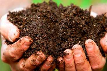 Разведение червей и получение биогумуса