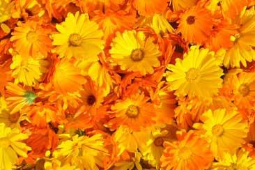 Съедобные цветы - Траварт