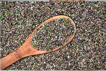 Семян конопли пищевой польза и вред для человека - Траварт