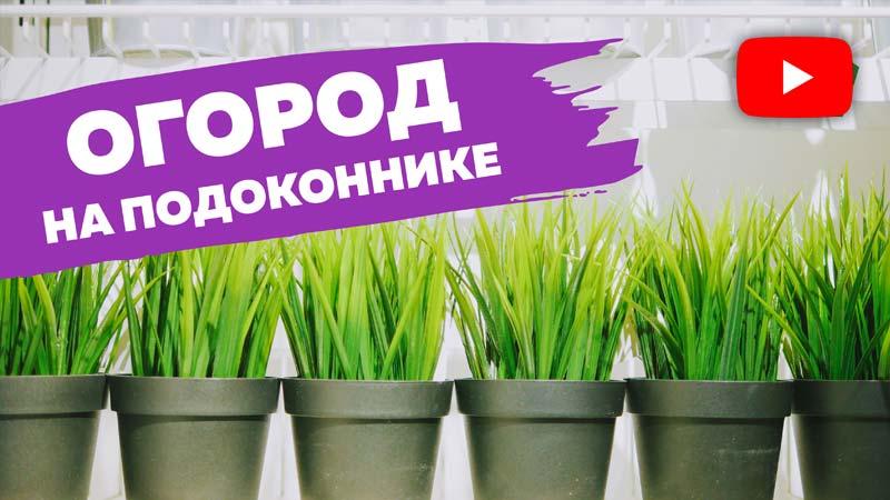 Как организовать огород на подоконнике?