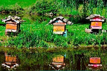 Купить улий для пчёл, куплю ули, Авито AliExpress, дадан купить, улей ппу, улей лежак, ульи рута, ульи flow hive