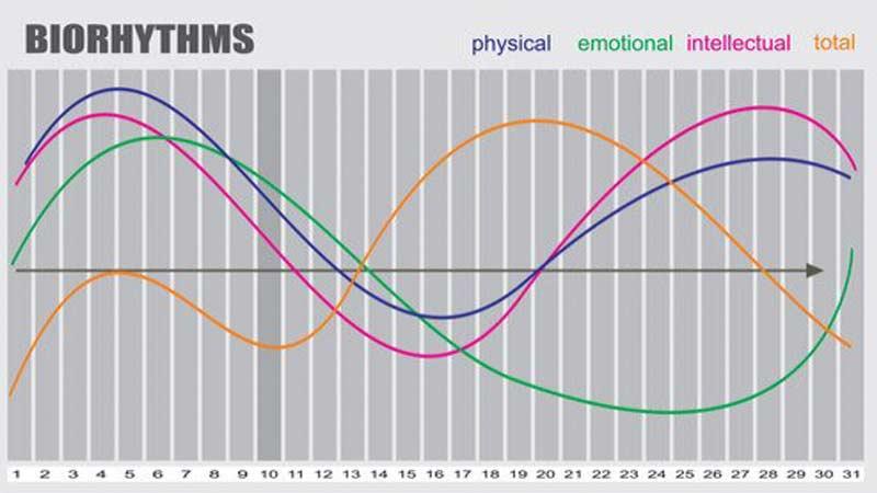 биоритмы и циркадные ритмы