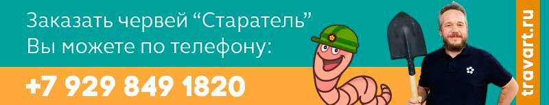 Заказать червеей стараель по телефону  79298491820
