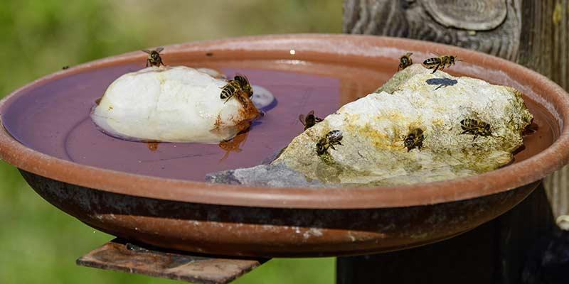 Пчёлкам необходима поилка, чтобы они в ней не утонули
