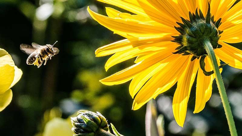 Как привлечь пчел на участок?