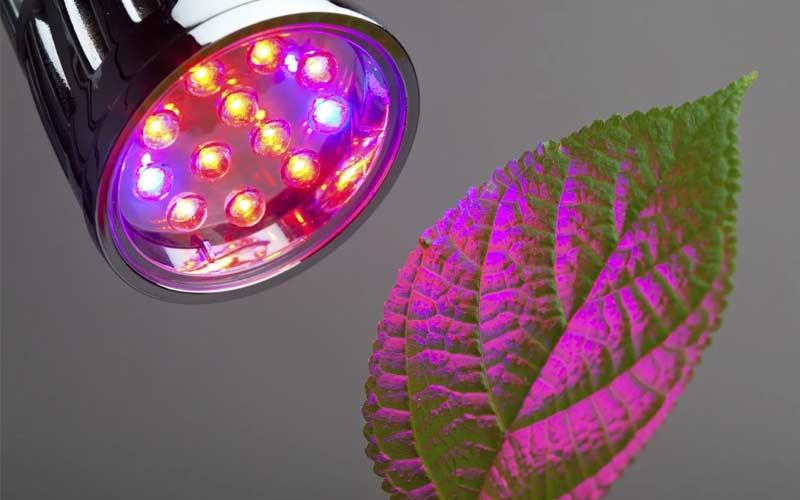 Красный и синий свет для растения