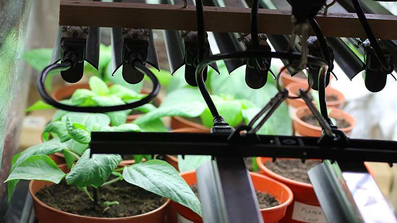 Как определенный свет влияет на растение