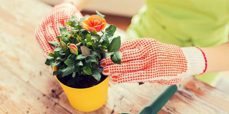грунт для розы