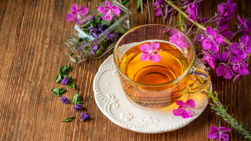 Копорский чай, иван-чай, кипрей узколистный