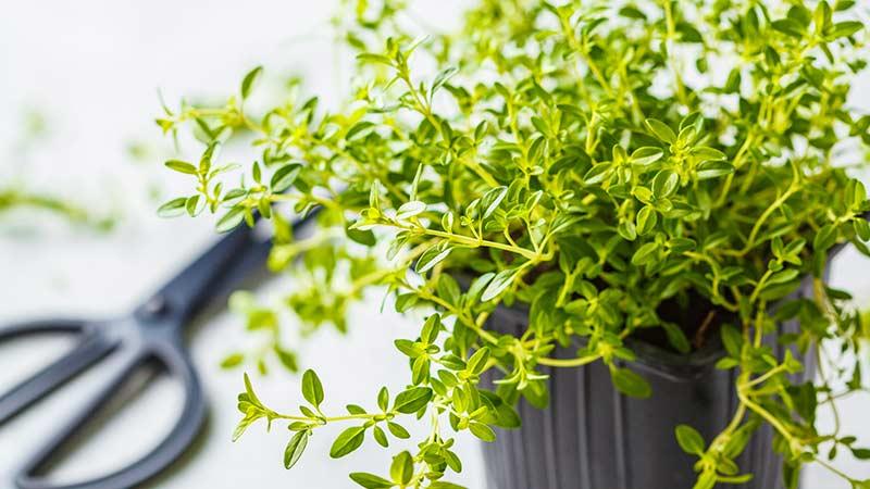 25 лекарственных трав, которые вы можете выращивать дома
