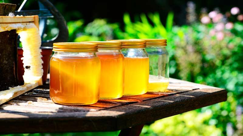 луговой мёд полезные свойства