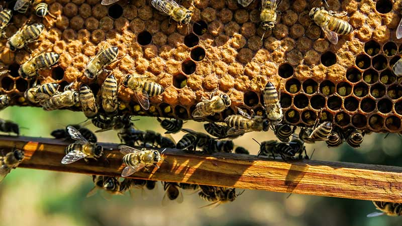 Мёд для кожи