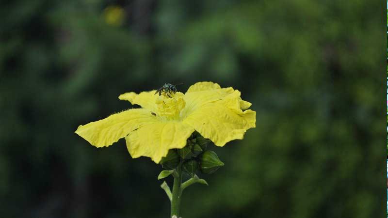 цветок люяяа мочалка