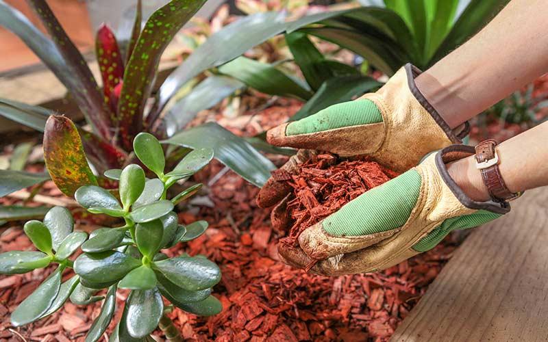 мульчирование комнатных растений