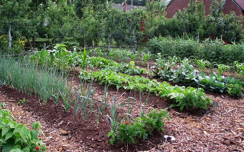 Мульчирование огородных дорожек