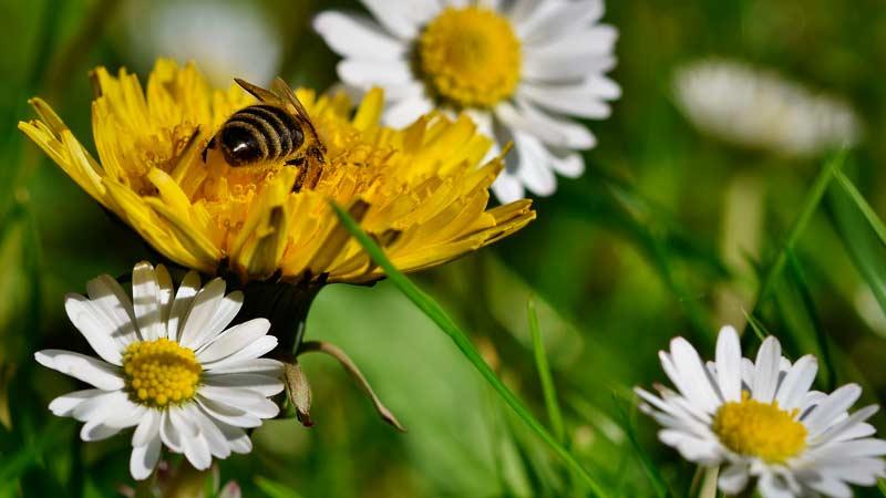 мёд луговой разнотравье