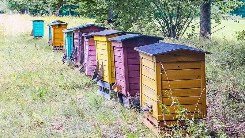 Что такое органический мед?