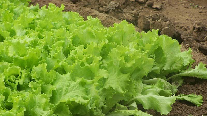 Органическое земледелие с чего начать?
