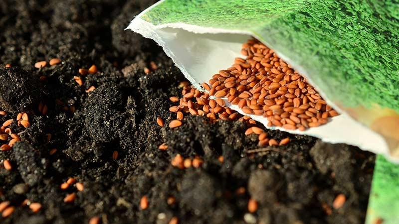 Распространенные ошибки при посеве семян