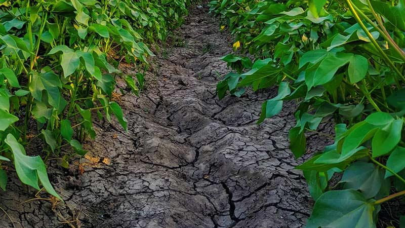Какие овощи посадить в глинистую почву?