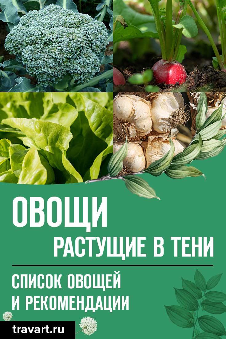 Овощи, которые хорошо растут в тени