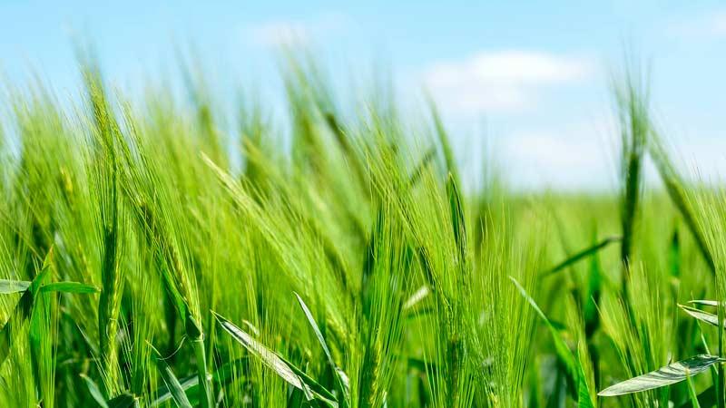Органические удобрения купить