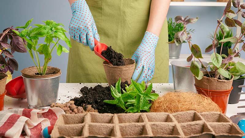 рассаживание растений