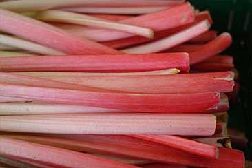 Реве́нь (лат. Rhéum) чаще всего считают ярким фруктом из-за его сладкого, терпкого вкуса