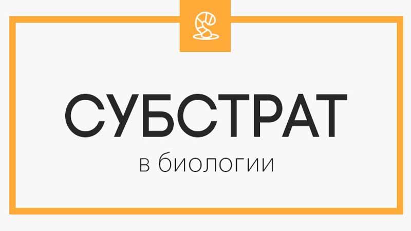 Субстрат