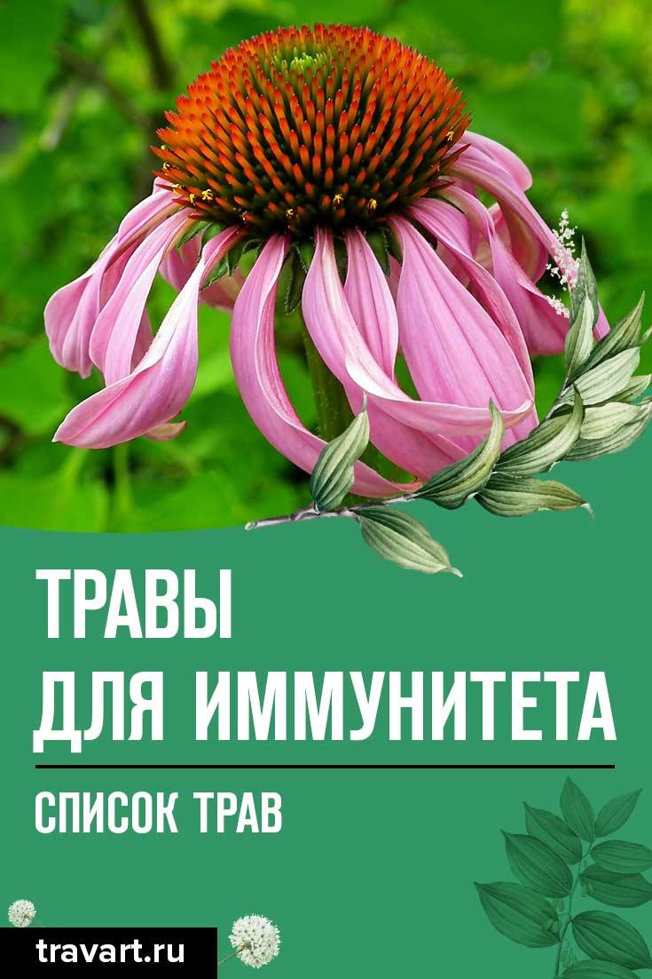 Травы для иммунитета