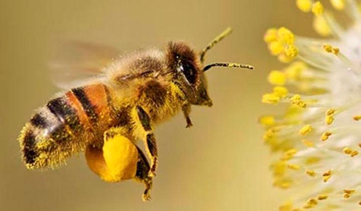 купить пыльцу пчелиную ТРАВАРТ travart.ru