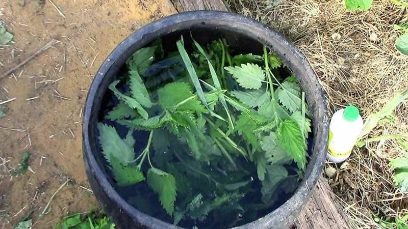 Готовим удобрение из крапивы