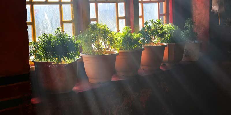 Поставьте растения на подоконник, на солнечную сторону