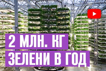 Бизнес выращивание зелени в вертикальных теплицах