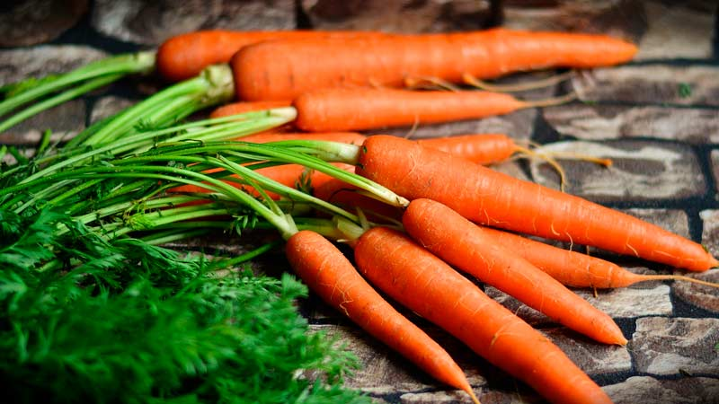 Морковь. Выращивание