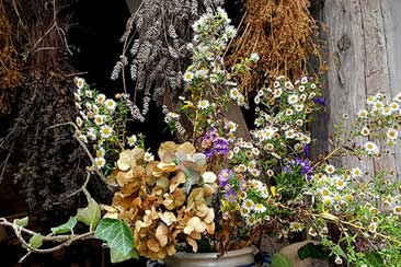 Как заготавливать и хранить растения