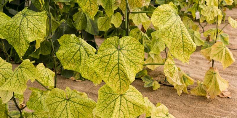желтые листья на растениях