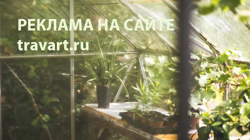 Реклама на TRAVART.ru